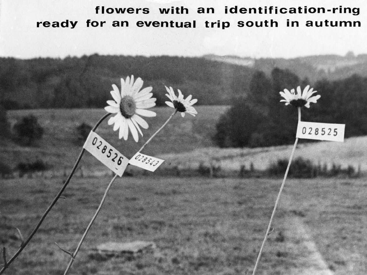 Identification Program. Korai konceptuális művészkönyvek, 1970-71